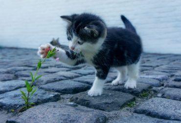 cat-2536662_960_720