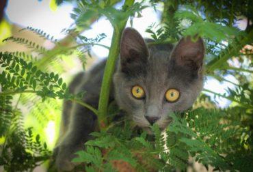cat-pet-animal-animals-look-puppy-cats-pets